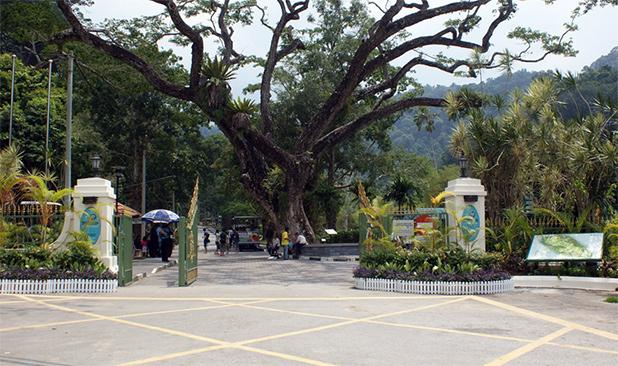 botanische-tuin-van-penang-1