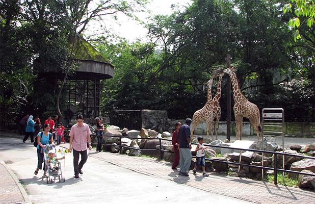 dierentuin-kuala-lumpur-4