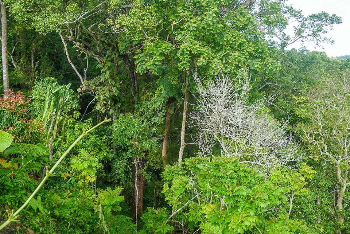 Jungle bij Penang Hill