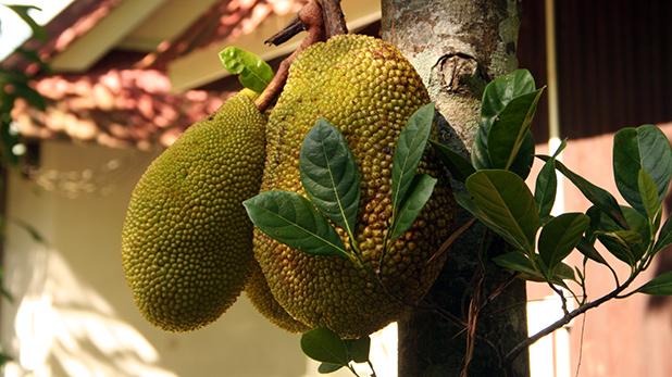 fruit-in-maleisie-1