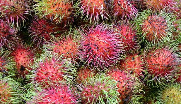 fruit-in-maleisie-3