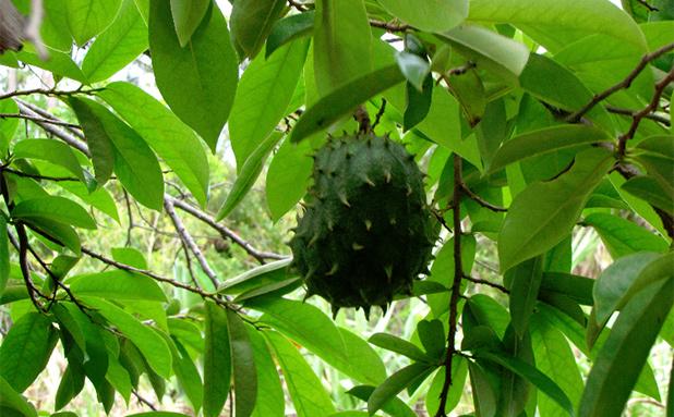 fruit-in-maleisie-5