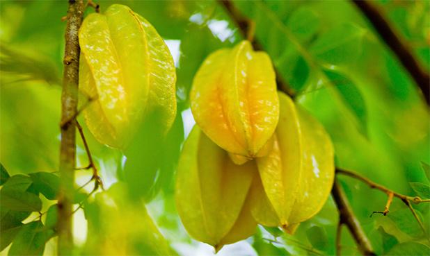 fruit-in-maleisie-6