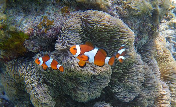 snorkelen-in-maleisie-7