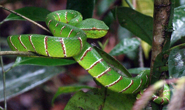 slangen-in-maleisie-2