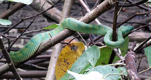 slangen-in-maleisie-3