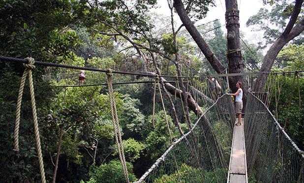 Taman Negara Canopy Walk 1 Taman Negara Canopy Walk 2 ... & Taman Negara | Veelzijdig Maleisie