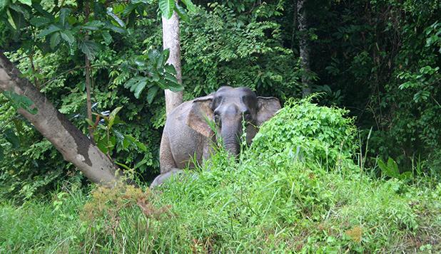 reisverslag-ilsa-2006-kinabatangan-rivier-1