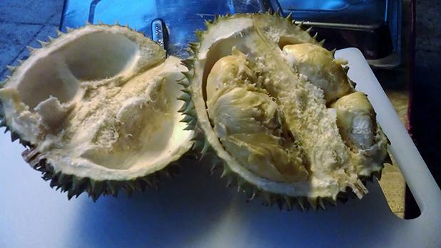 overheerlijke-durian-op-rainforest-resort