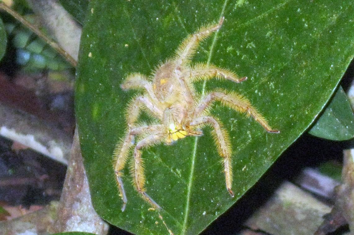 spin-tijdens-junglewalk-in-taman-negara