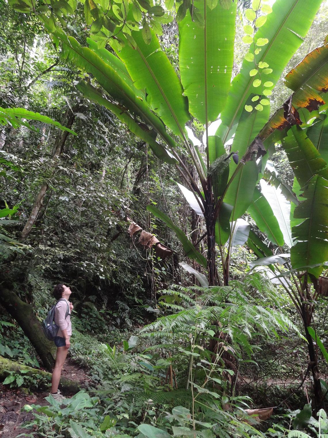 reisverslag-roan-jungle-bij-cameron-highlands
