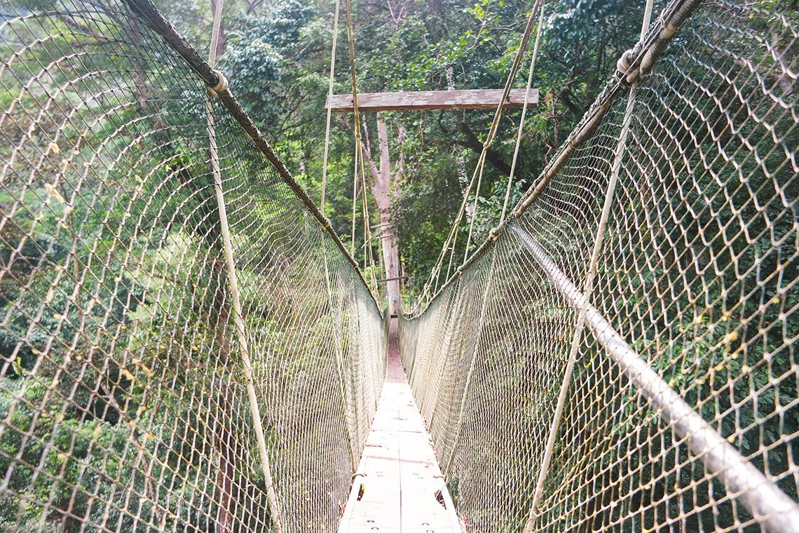 321 Mulu Park