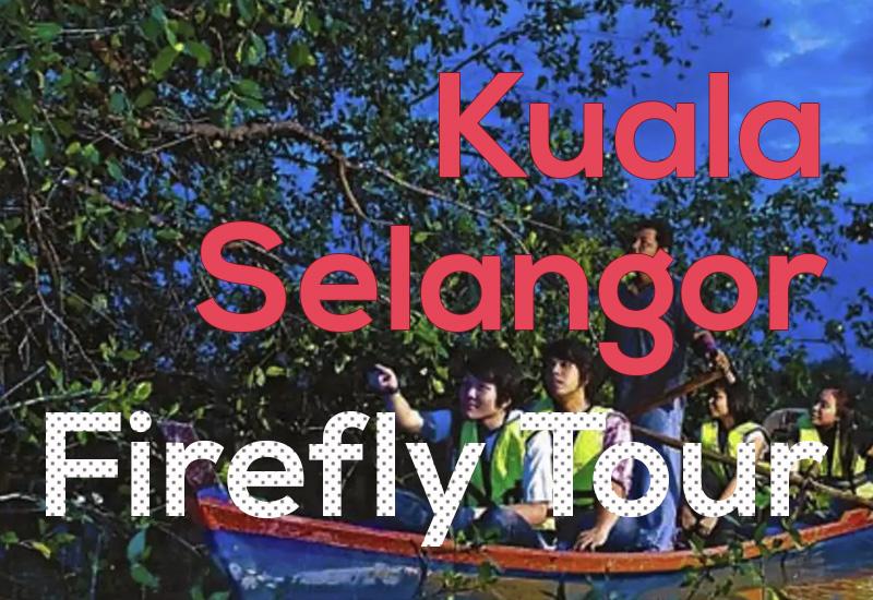 Kuala Selangor Firefly Tour